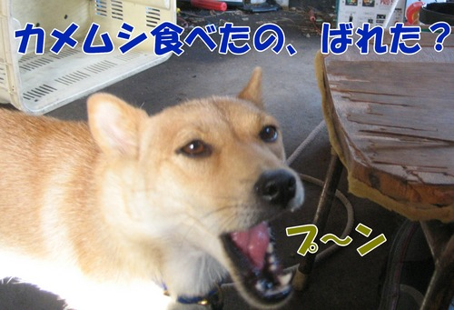 IMG_0173ブ.jpg