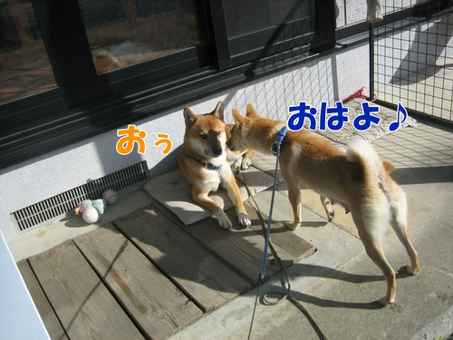 IMG_0243ブ.jpg
