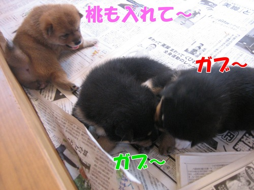 IMG_8700ブ.jpg