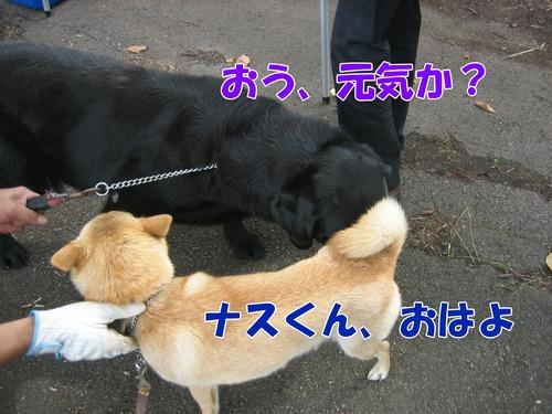IMG_8771ブ.jpg