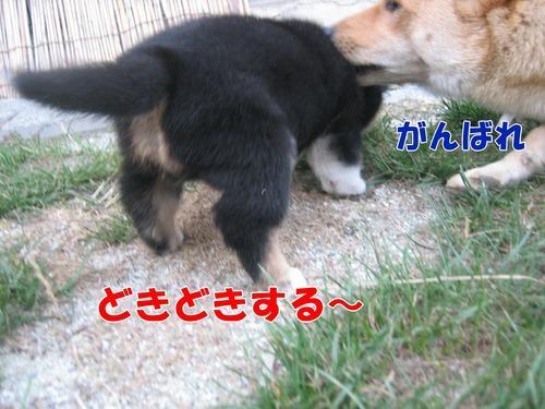 IMG_8840ブ.jpg