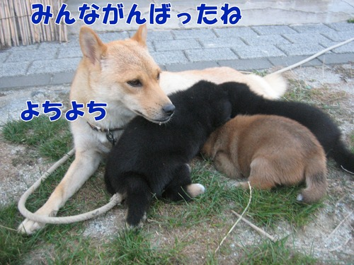 IMG_8857ブ.jpg