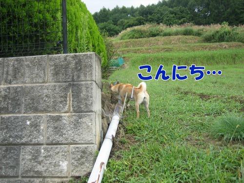 IMG_8858ブ.jpg