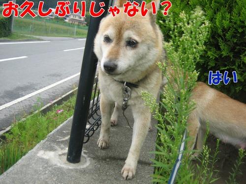 IMG_8861ブ.jpg