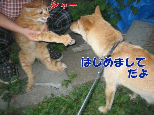 IMG_8878ブ.jpg