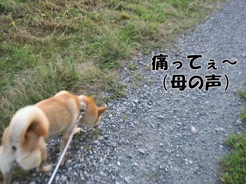 IMG_8879ブ.jpg