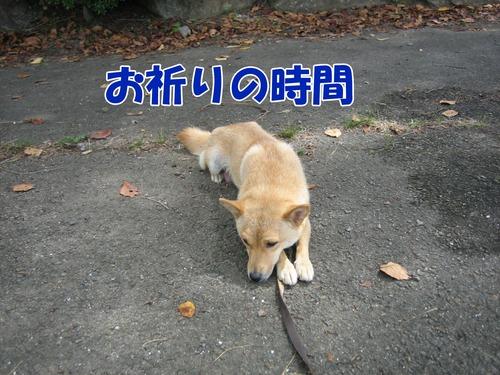 IMG_9246ブ.jpg