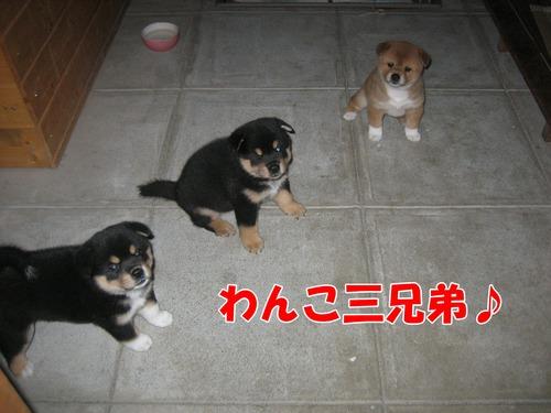 IMG_9432ぶ.jpg