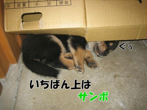 IMG_9481ぶ.jpg