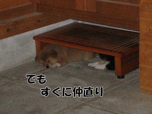 IMG_9519ブ.jpg