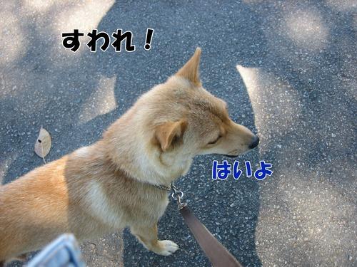 IMG_9568ブ.jpg