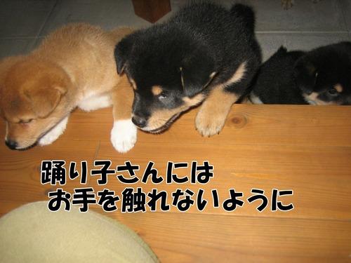 IMG_9753ブ.jpg