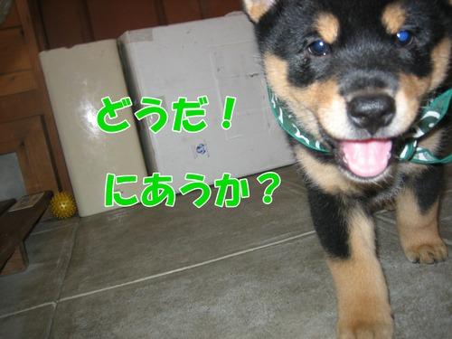 IMG_0383ブ.jpg