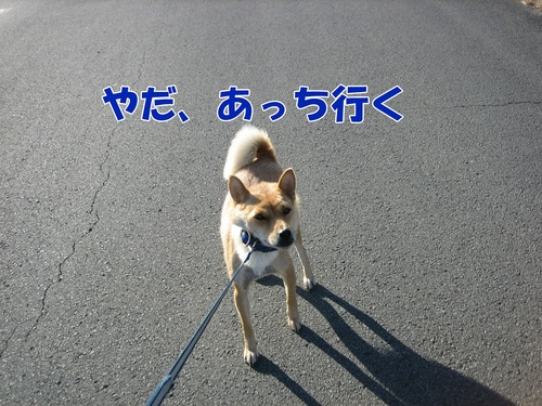 IMG_0573ブ.jpg