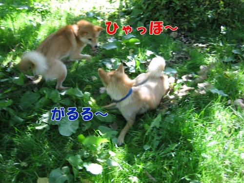 IMG_0581ブ.jpg