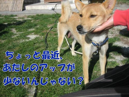 IMG_1041ブ.jpg