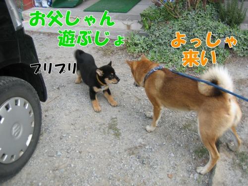 IMG_1204ブ.jpg