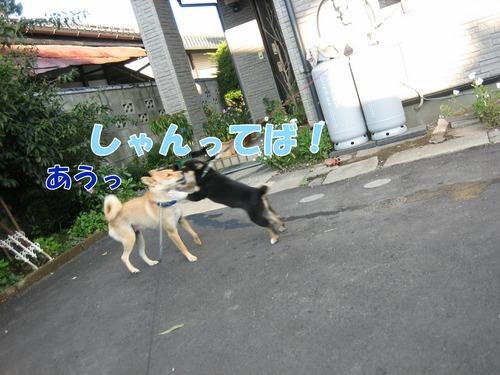 IMG_1375ブ.jpg