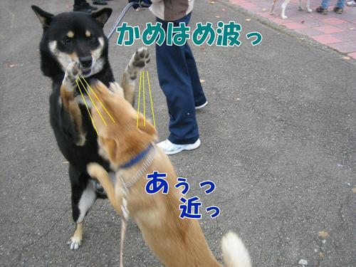 IMG_2530ブ.jpg