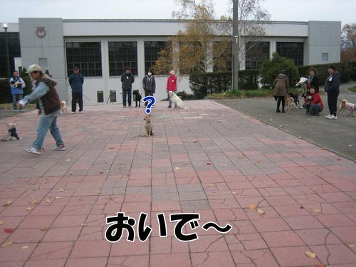 IMG_2533ブ.jpg