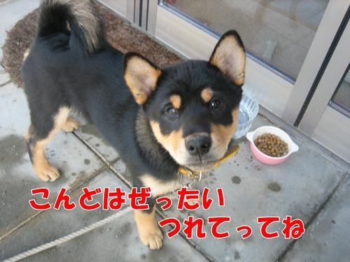 IMG_2685ブ.jpg