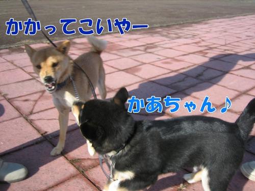 IMG_2732ブ.jpg