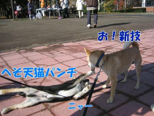 IMG_2734bu.jpg