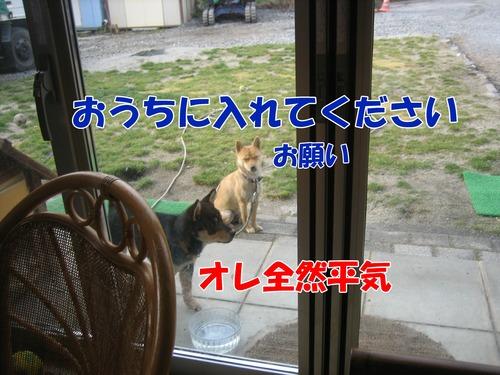 IMG_3035ブ.jpg