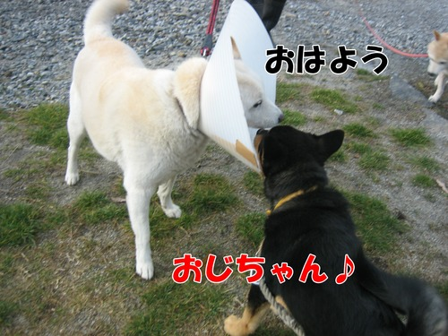 IMG_3037ブ.jpg