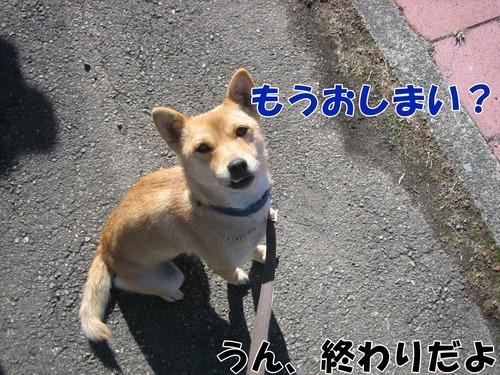 IMG_3136ブ.jpg