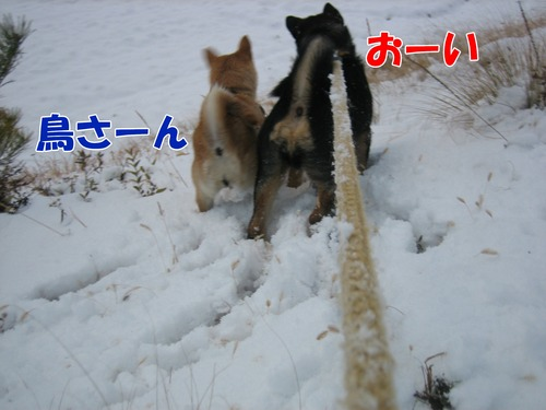 IMG_3500ブ.jpg