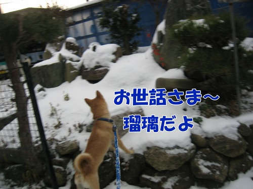 IMG_3516ブ.jpg