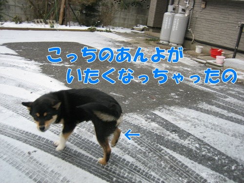 IMG_3531ブ.jpg