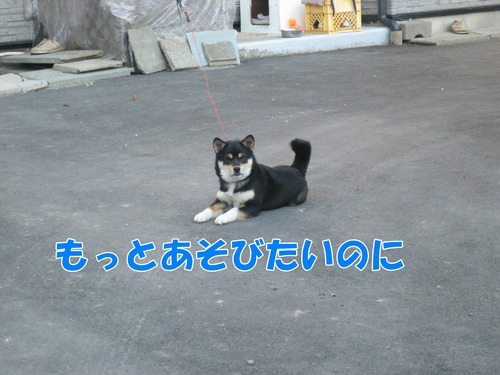 IMG_3593ブ.jpg