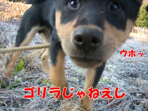 IMG_3671ブ.jpg