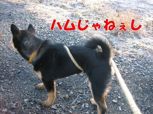 IMG_3673ブ.jpg