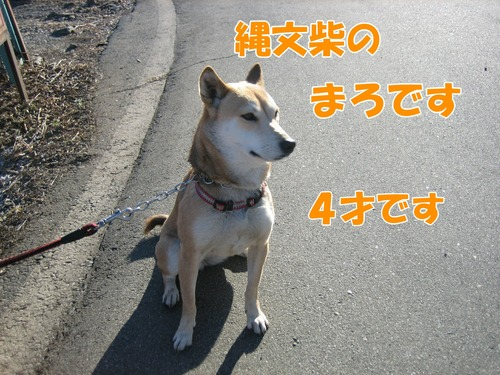 IMG_3697ブ.jpg