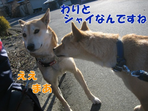 IMG_3701ブ.jpg