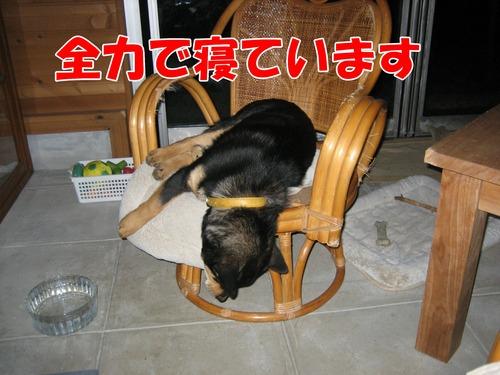IMG_3819ブ.jpg