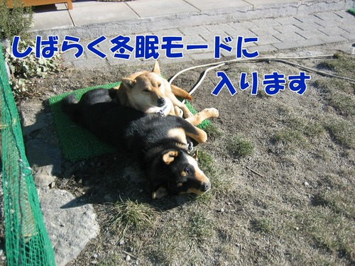 IMG_3841ブ.jpg