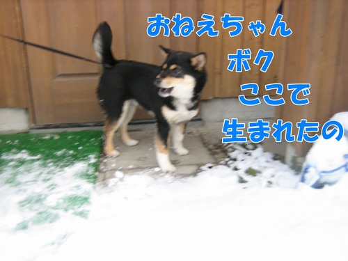 IMG_3870ブ.jpg